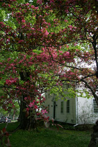 House through crabapples